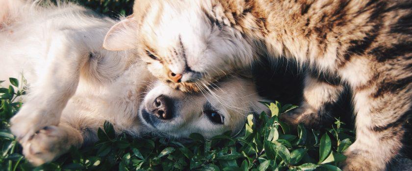 Lockdown Pets